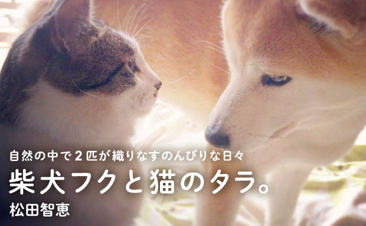 柴犬フクと猫のタラ。 自然の中で2匹が織りなす のんびりな日々  松田智恵